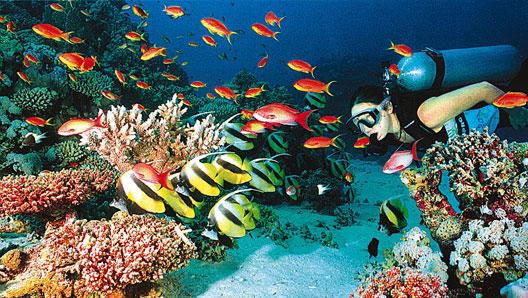 Cours de plongée en thailande